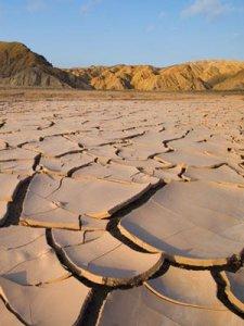 Последствия засухи. Посевы сельскохозяйственных культур погибли в 21 субъекте РФ